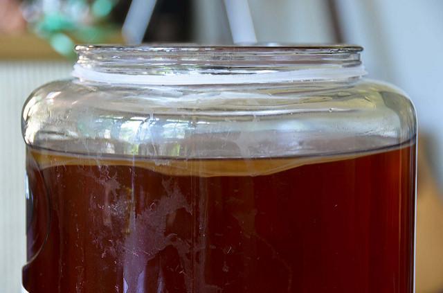 Jar of kombucha with SCOBY